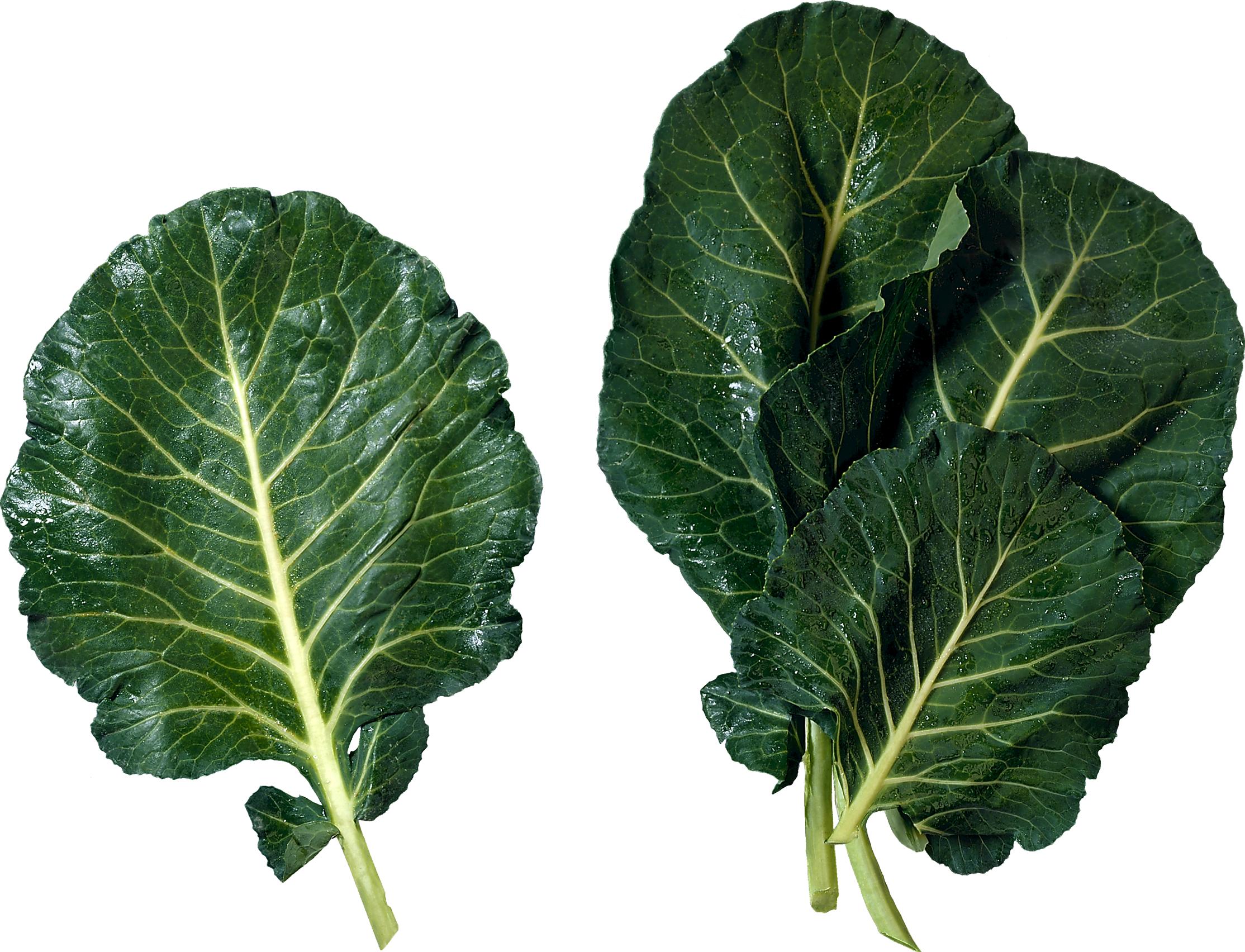 Salad png images free. Clipart vegetables leafy vegetable