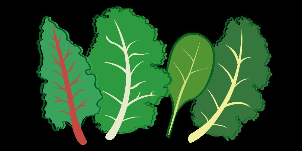 Clipart vegetables leafy vegetable. Super greens kit home