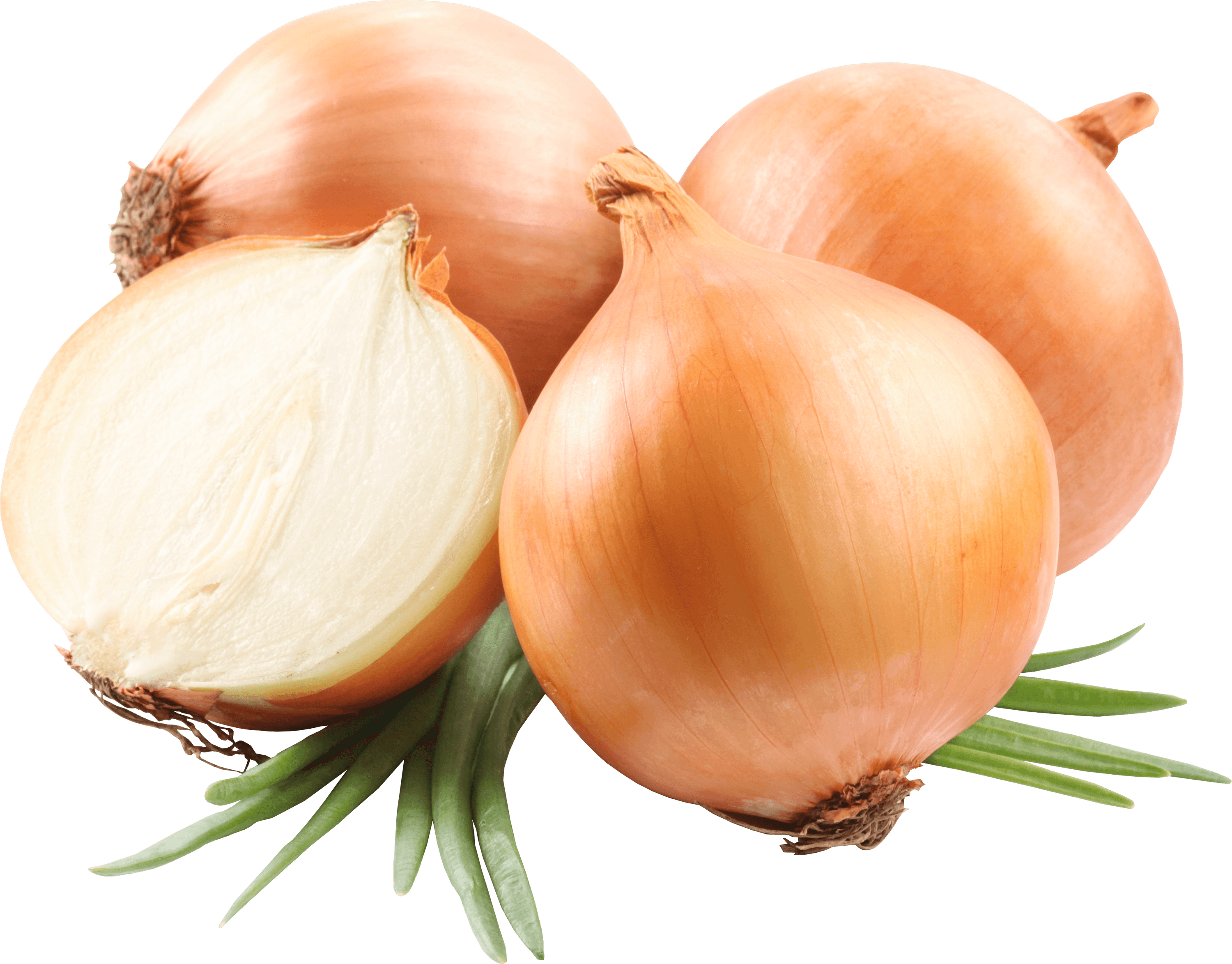 Transparent png stickpng a. Onion clipart red onion