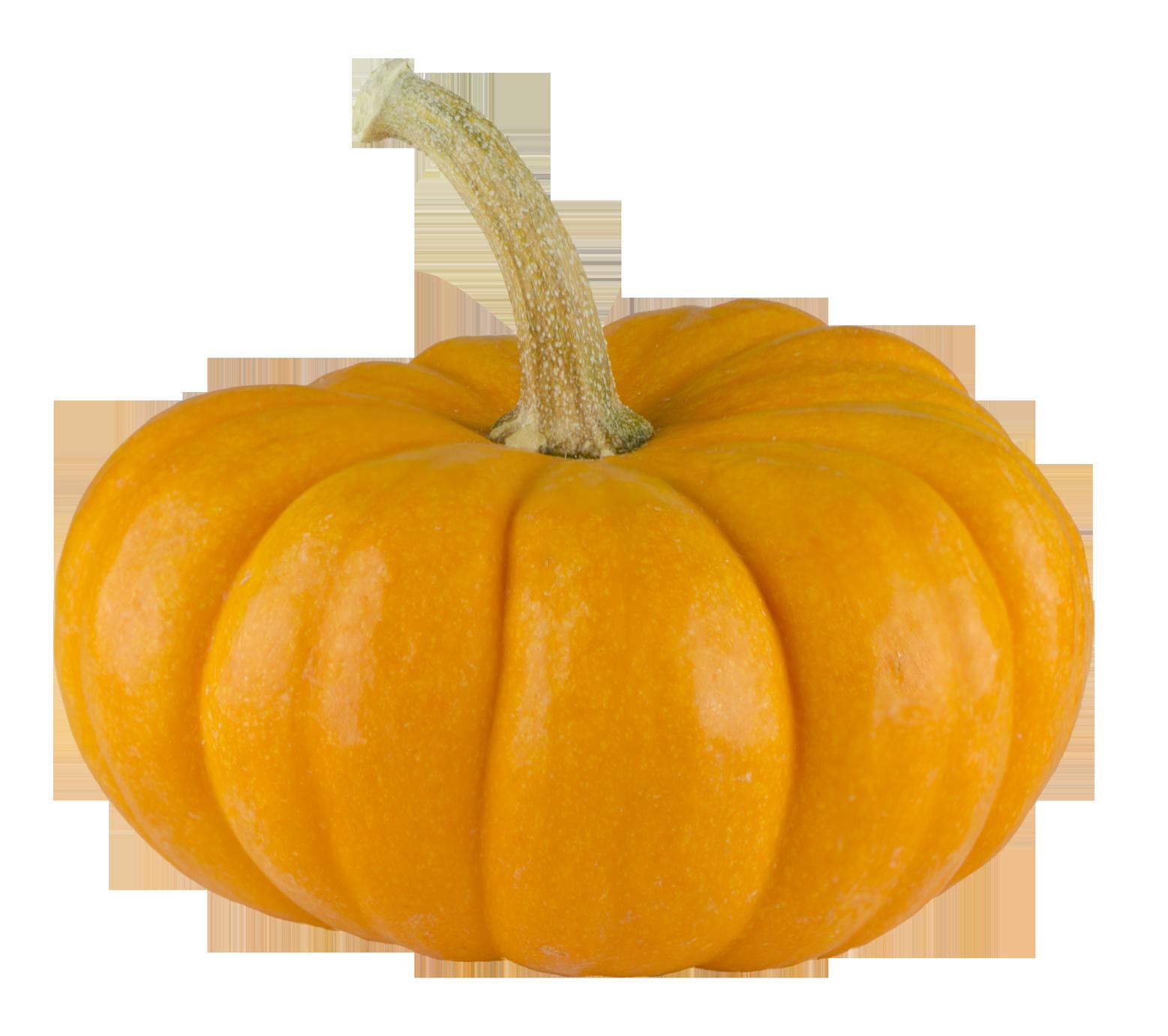 Zucchini clipart transparent background. Pumpkin png image purepng