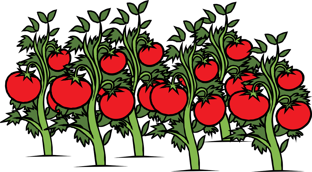 You say. Clipart vegetables tomato