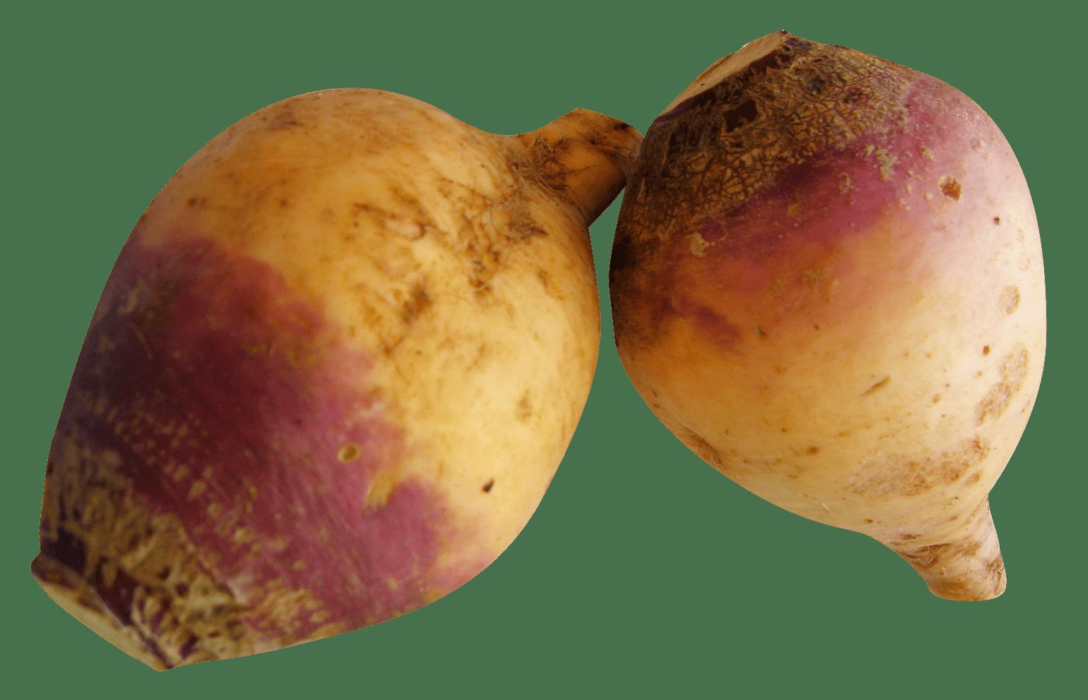 Vegetables clipart turnip. Rutabaga transparent png stickpng