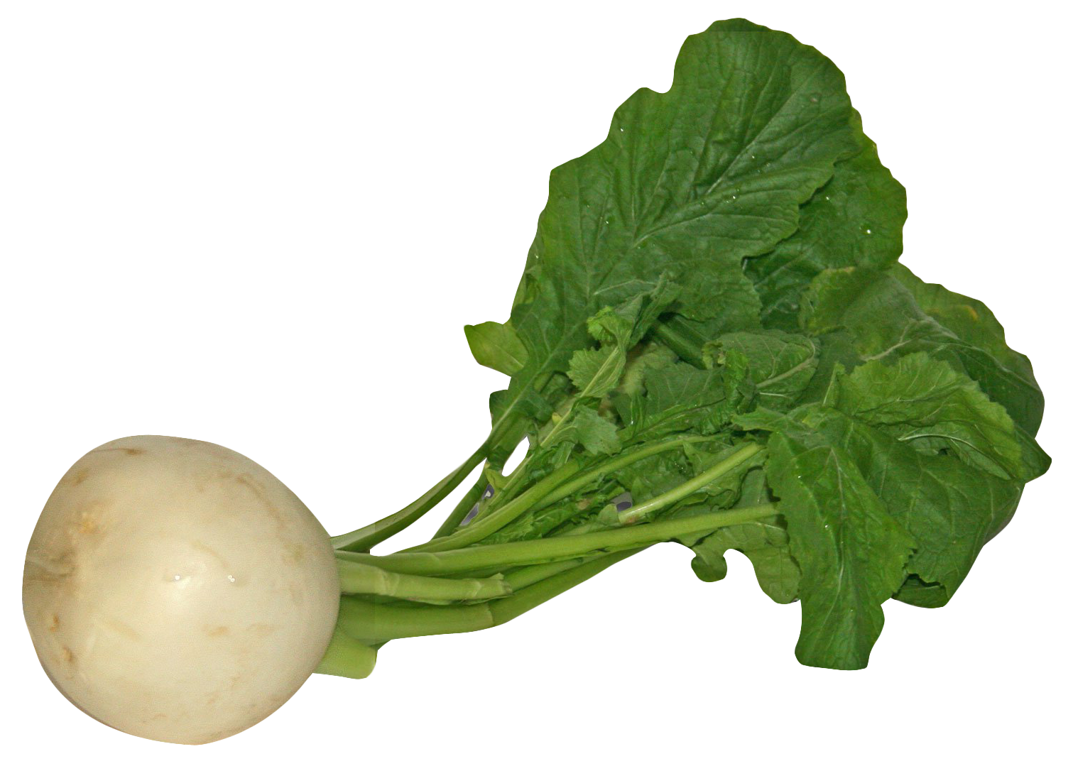Vegetables clipart turnip. Png image purepng free