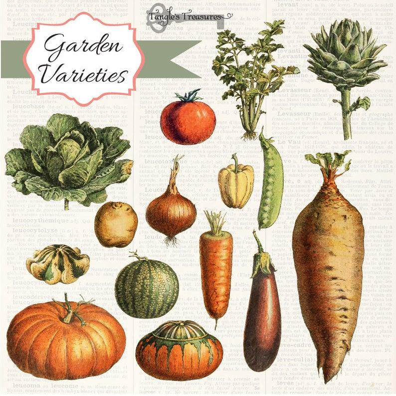 Digital set . Clipart vegetables vintage