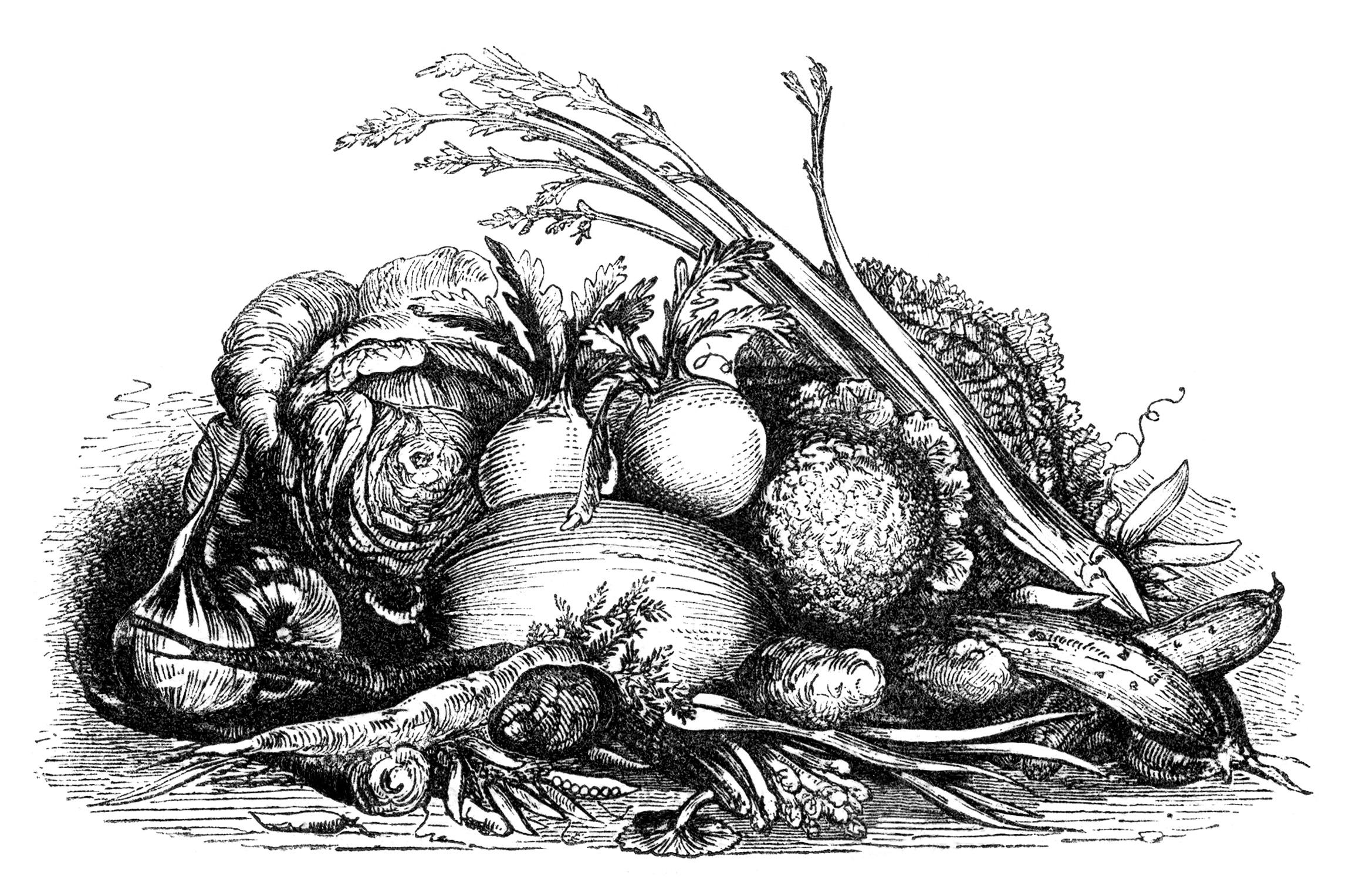 Clipart vegetables vintage. Fall harvest display of