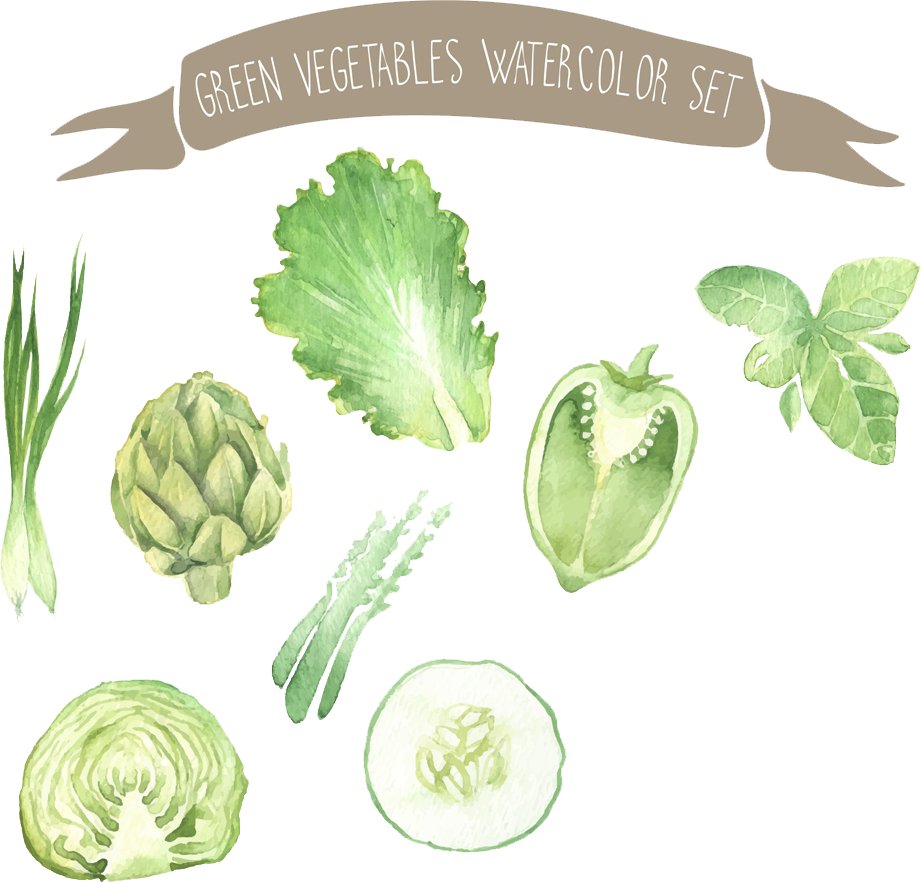 Painting vegetable drawing illustration. Vegetables clipart watercolor
