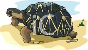 Clipart walking tortoise. A on the beach