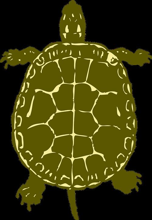 Clipart walking turtle. Pinart clip art free