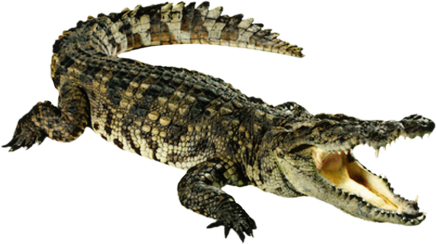 Popular and trending stickers. Water clipart crocodile
