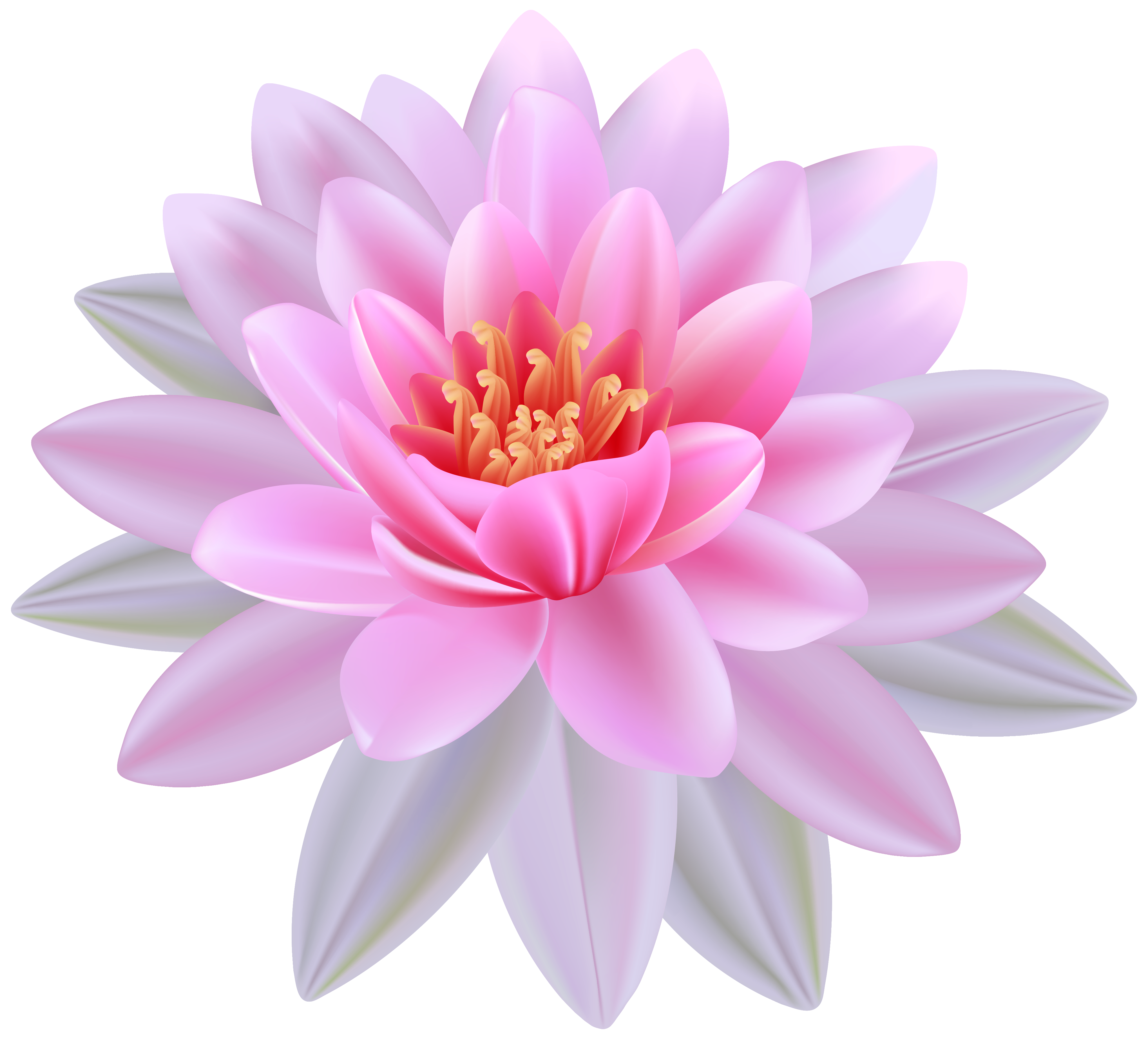 Pink water png image. Lily clipart waterlilly