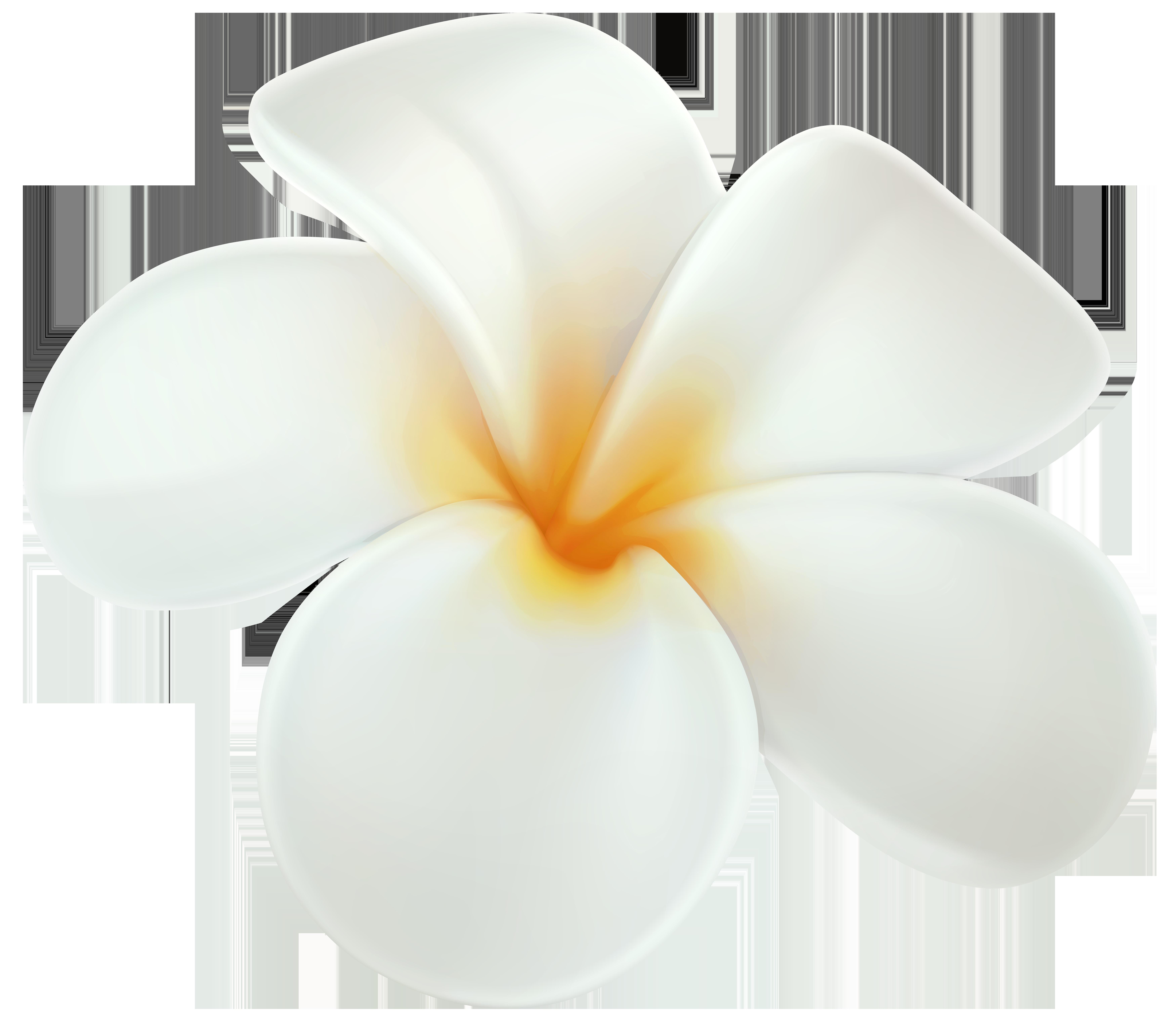 Plumeria flower png. Clip art best web
