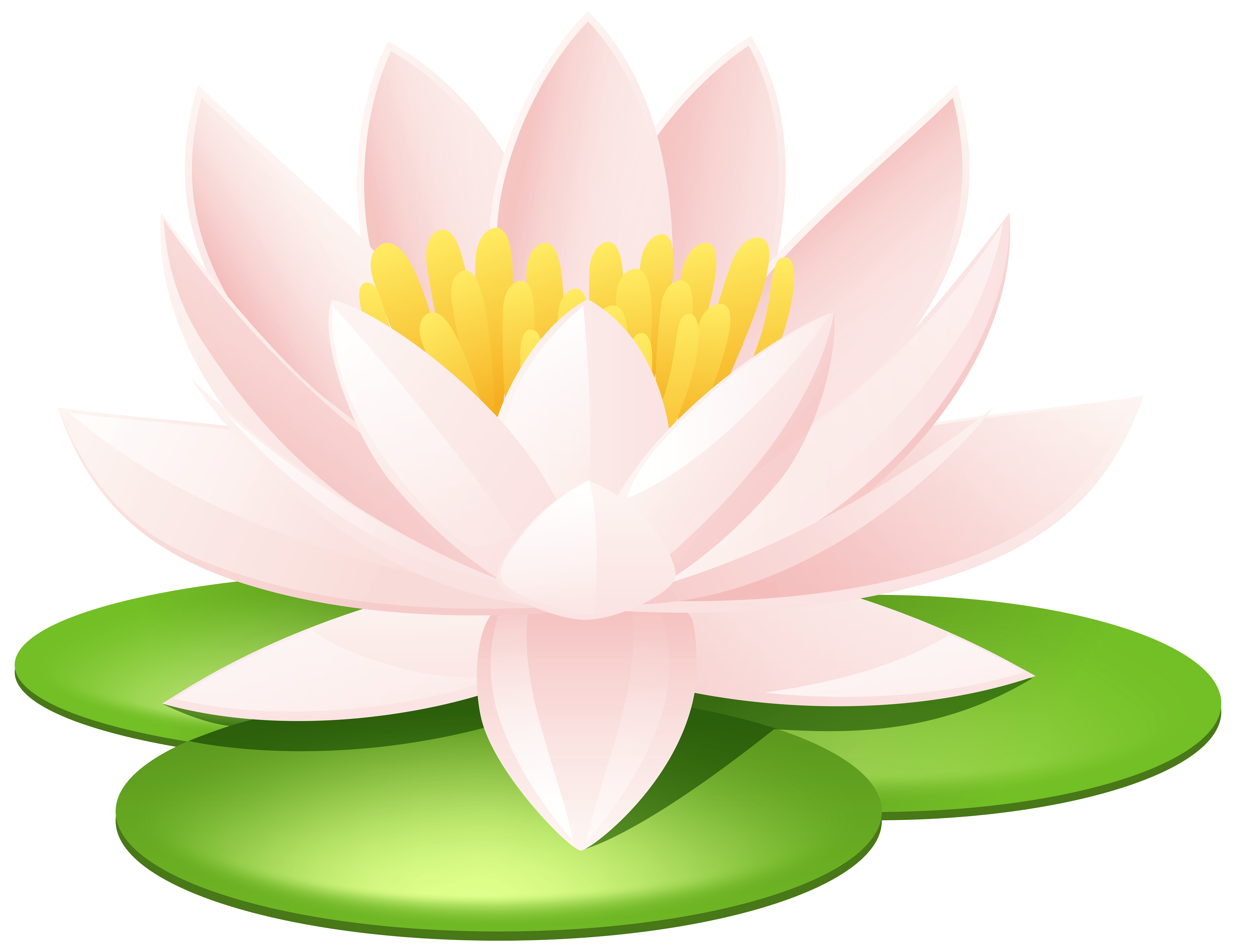 Worm clipart realistic. Water lily transparent png