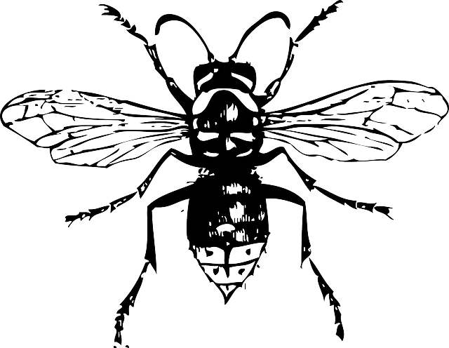 Insects clipart green insect. Free image on pixabay