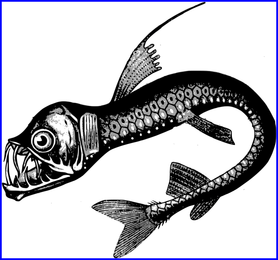 Girly clipart fish. The best real sea
