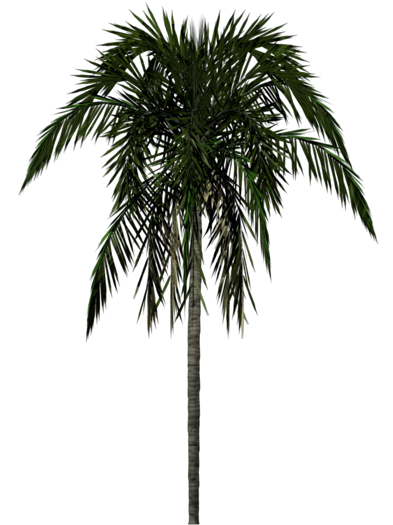 Desert clipart palm tree desert. Download png free icons