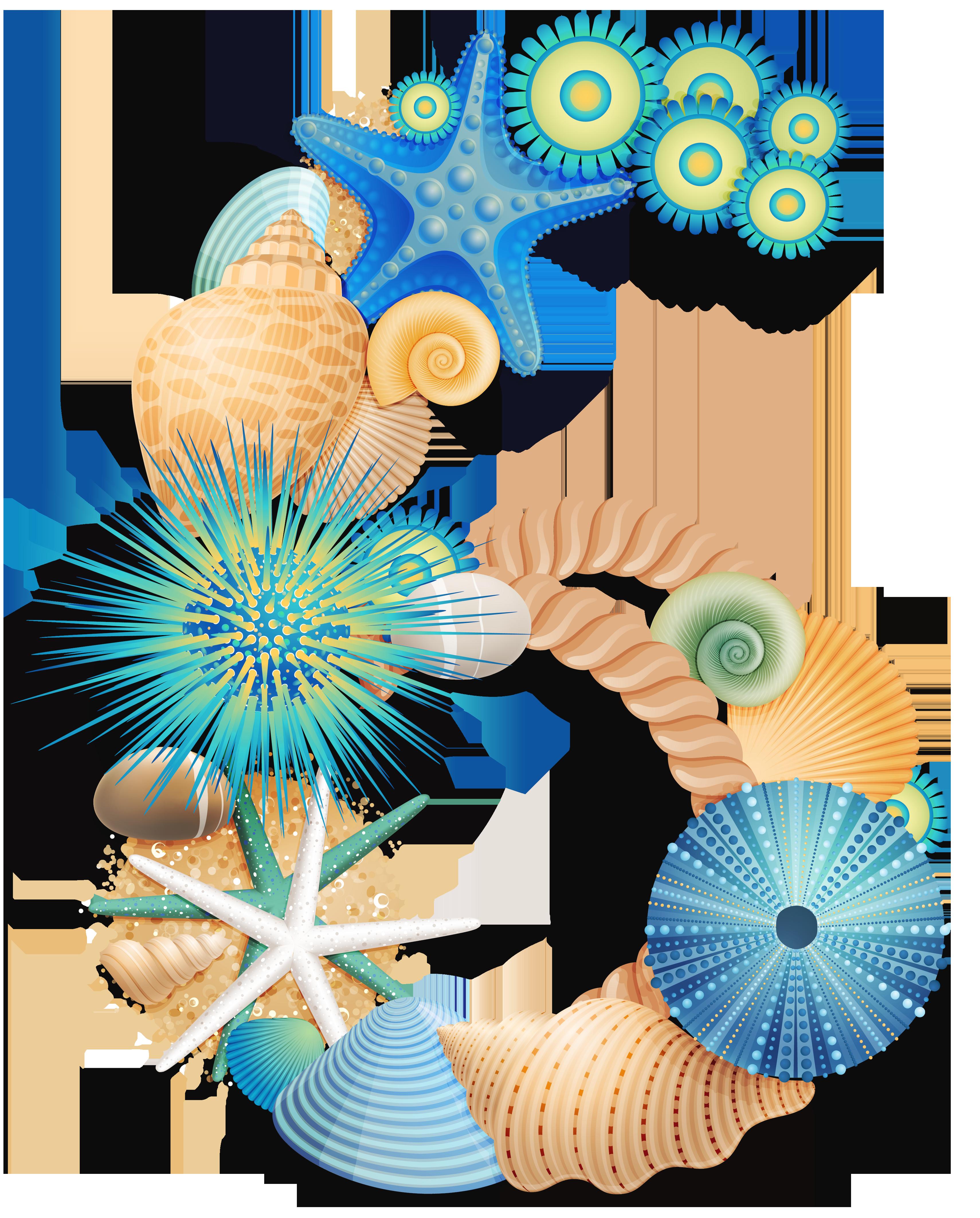 Seashells clipart aqua. Pin by on pinterest