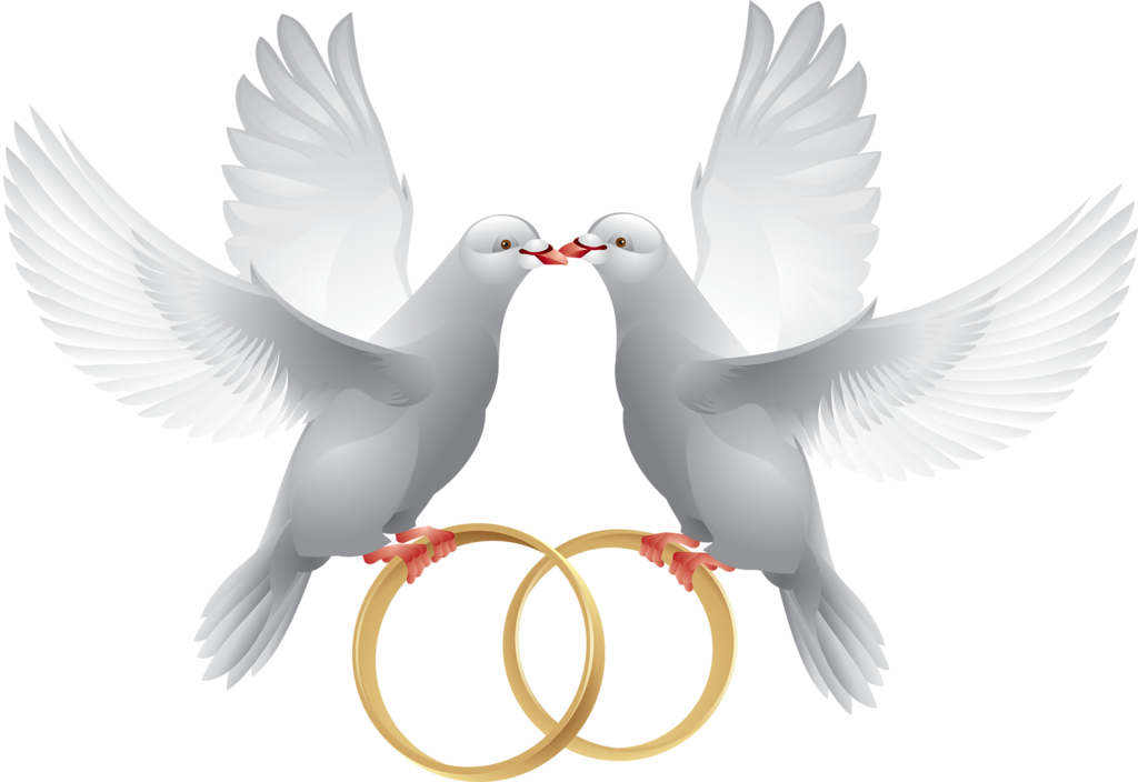 png pinterest clip. Clipart wedding dove