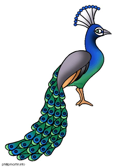 Peacock clipart mor. Wedding portal