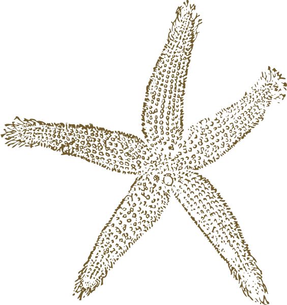 Metalic golden starfish for. Clipart wedding seashell