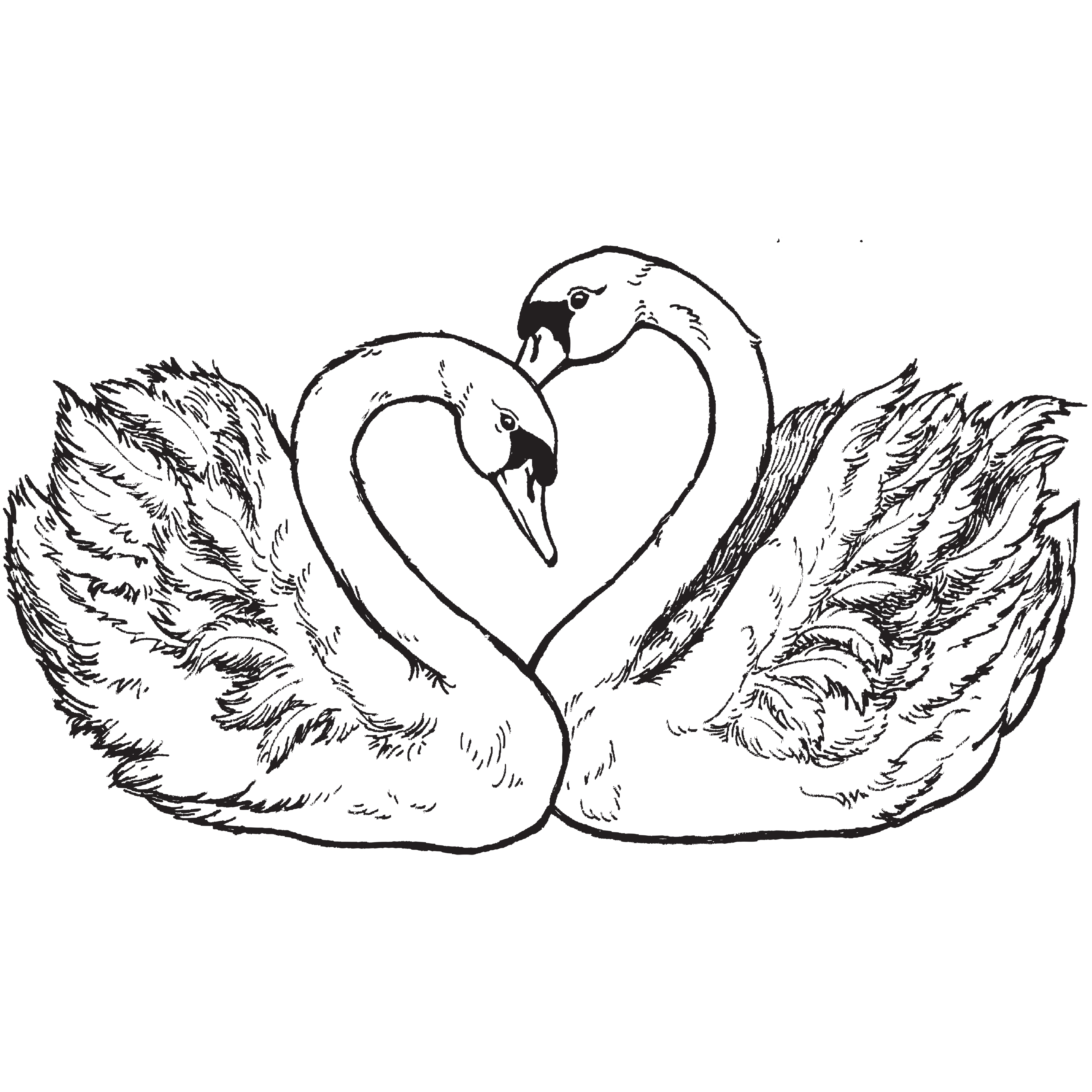 Illustrations with save the. Clipart wedding swan