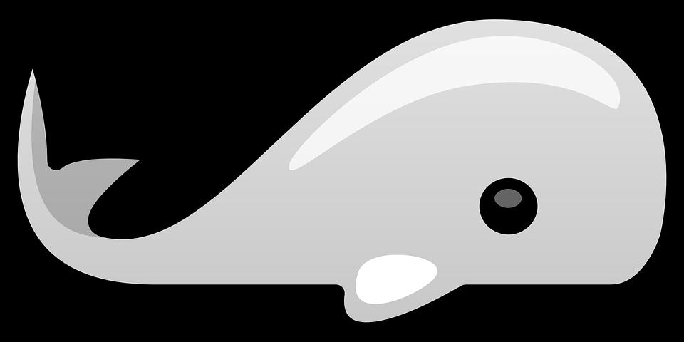 Cartoon beluga whale shop. Manatee clipart clip art