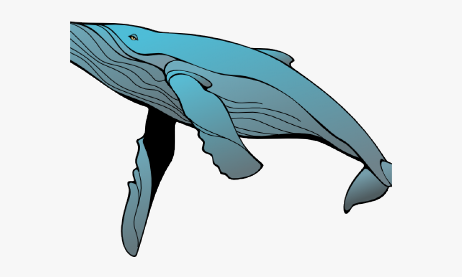 Blue png free cliparts. Clipart whale baleen whale