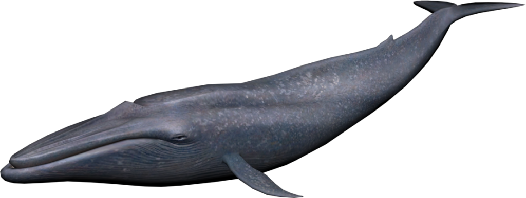 Png image peoplepng com. Clipart whale blue object
