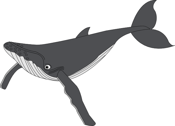Free cliparts download clip. Clipart whale gray whale