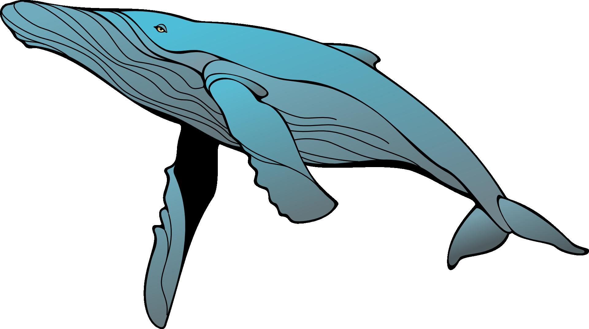 Clipart whale humpback whale. Blue clip art transprent