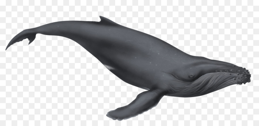 Cartoon illustration dolphin wildlife. Clipart whale humpback whale