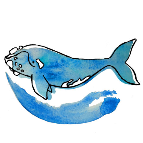 Clipart whale marine ecosystem. Healthy ocean bow seat