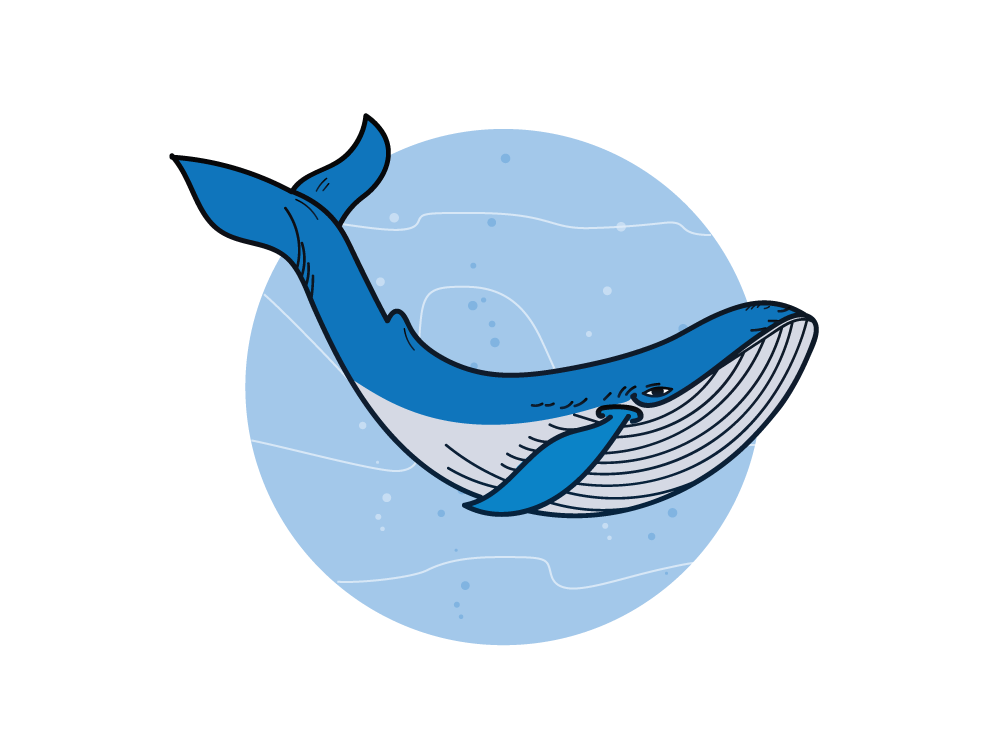 Wonders of biology age. Clipart whale marine ecosystem