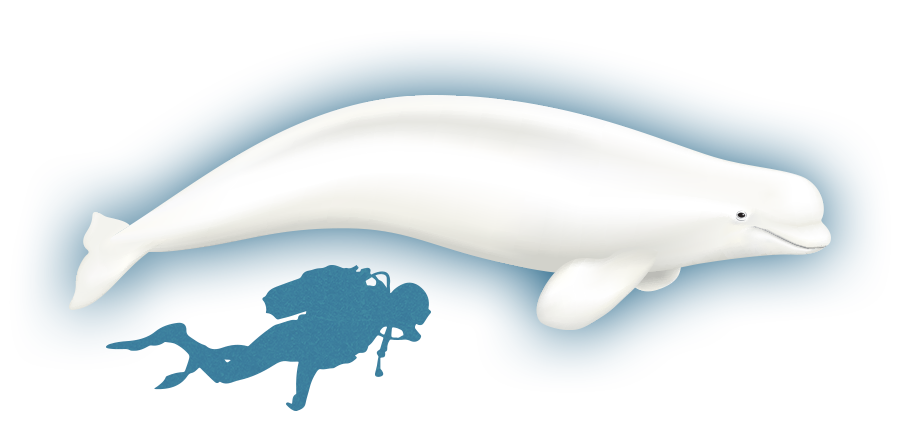 Clipart whale minke whale. The whales of baffin
