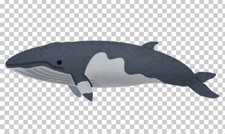 Dolphin cetaceans common hachinohe. Clipart whale minke whale