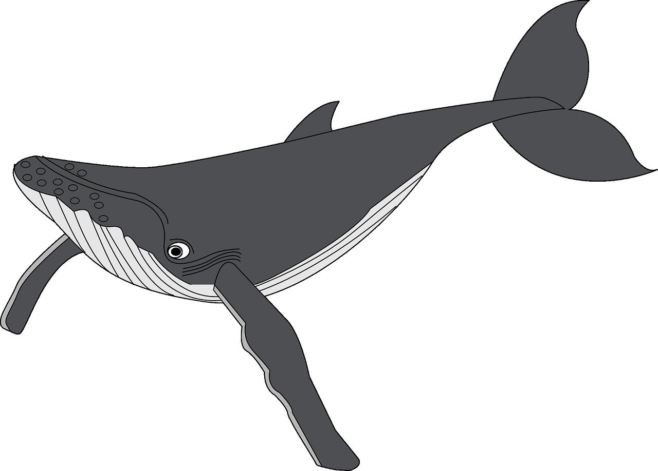 Clipart whale real whale. Humpback sperm clip art