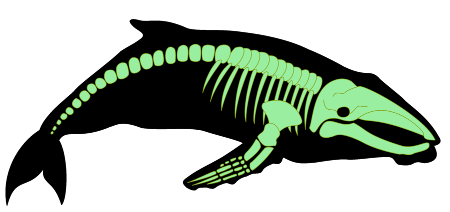 Xray clipart dog xray. Whale by shadow wolves