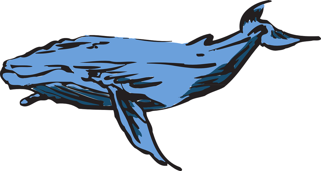 Kaikoura sea life we. Clipart whale southern right whale