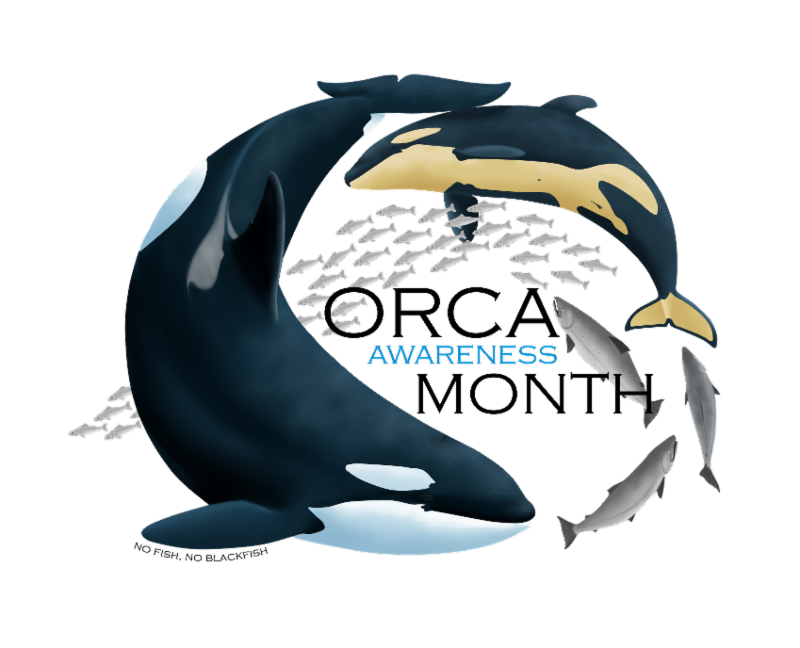 Clipart whale southern right whale. L pod comes in