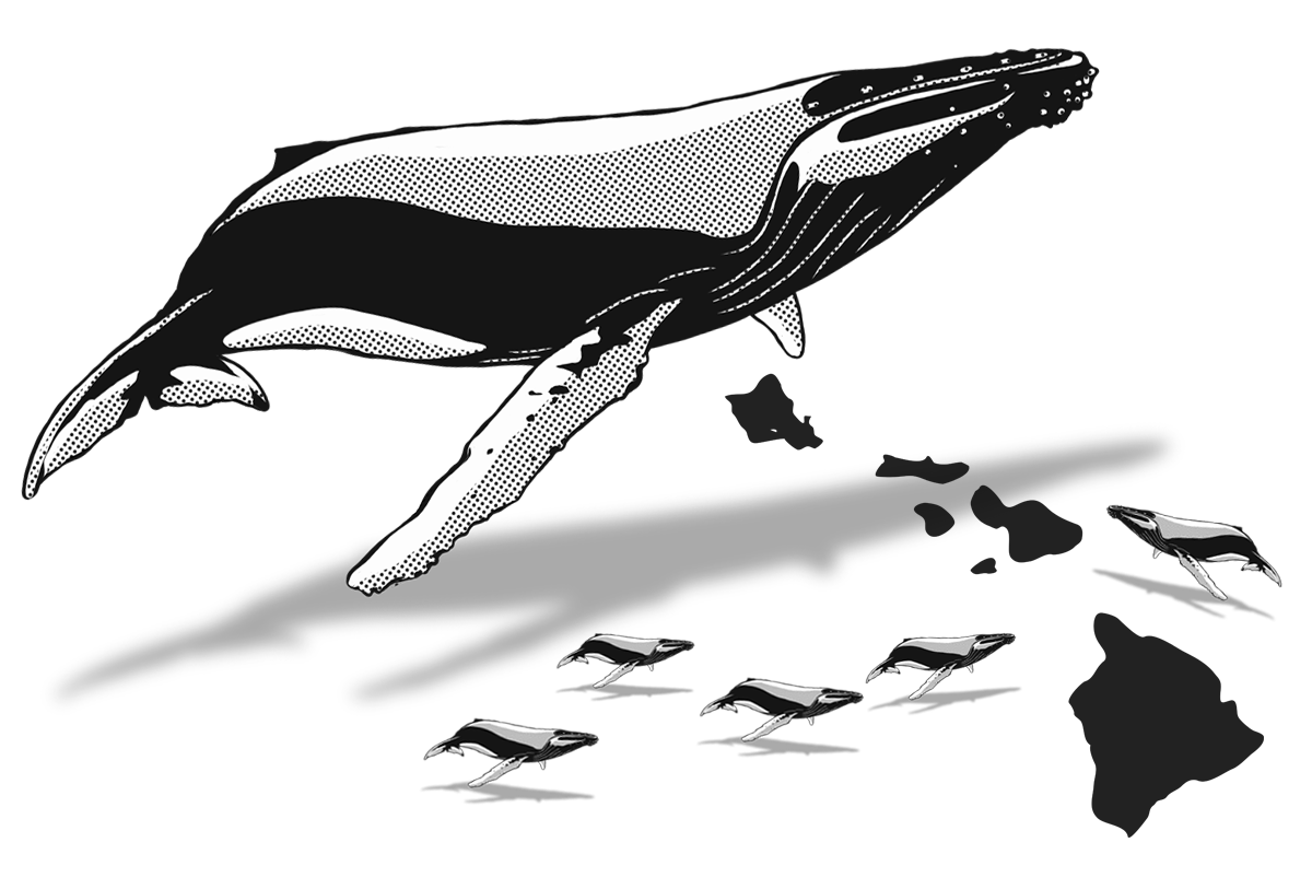 The whaleplanner january a. Clipart whale southern right whale