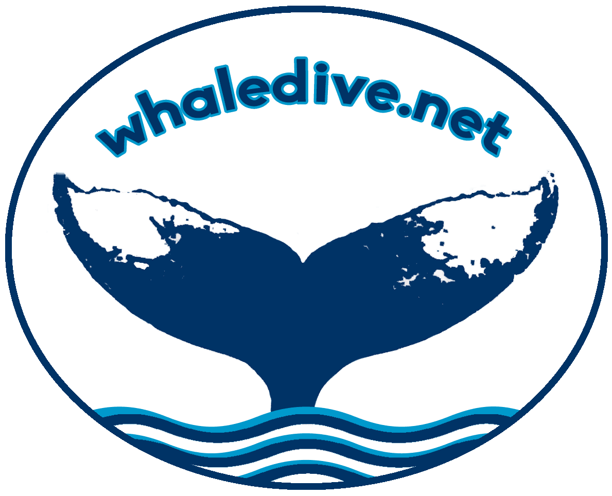 With humpback whales in. Clipart whale swim