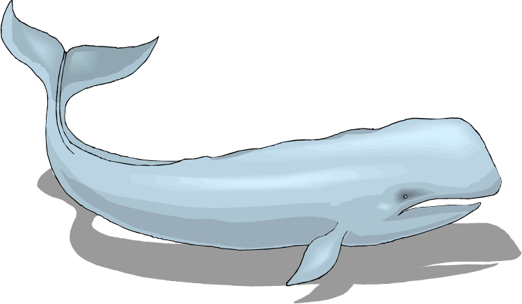 Free whaling. Clipart whale walrus