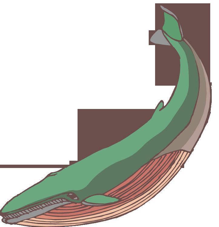 Free. Clipart whale walrus