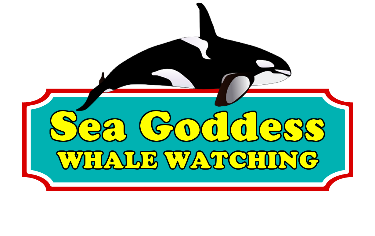 Media sea goddess resources. Clipart whale whale watching
