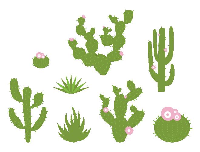 Bushes desert vegetation frames. Clipart winter foliage