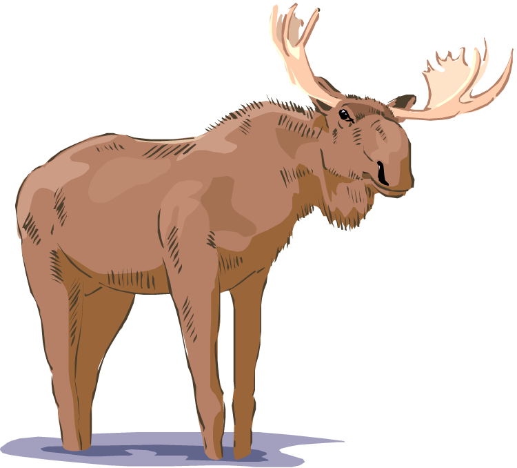 Free . Moose clipart moose rack
