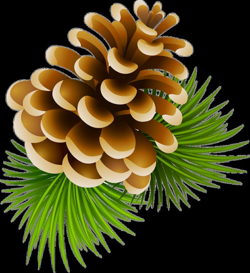 a e xl. Winter clipart pinecone
