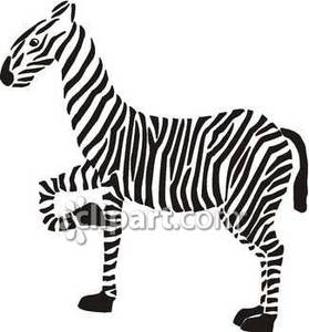 With leg up royalty. Clipart zebra front
