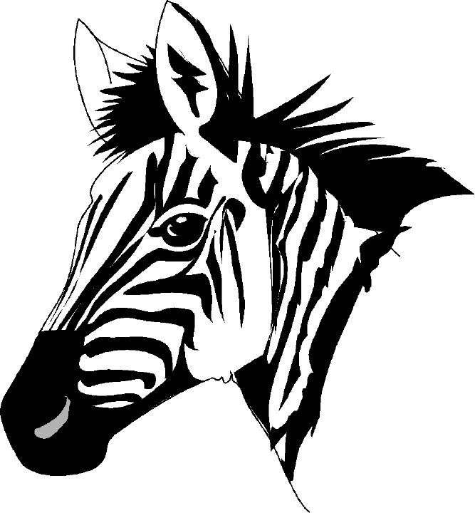 Clipart zebra front. Free download best