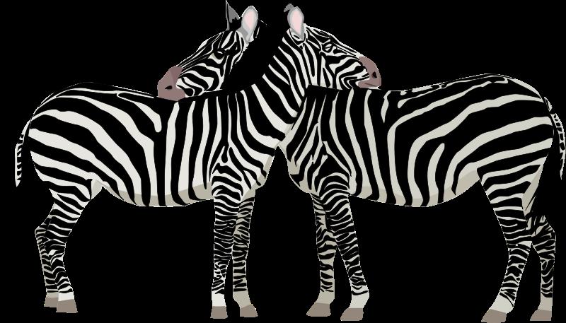 Zebras free stock photo. Clipart zebra illustration
