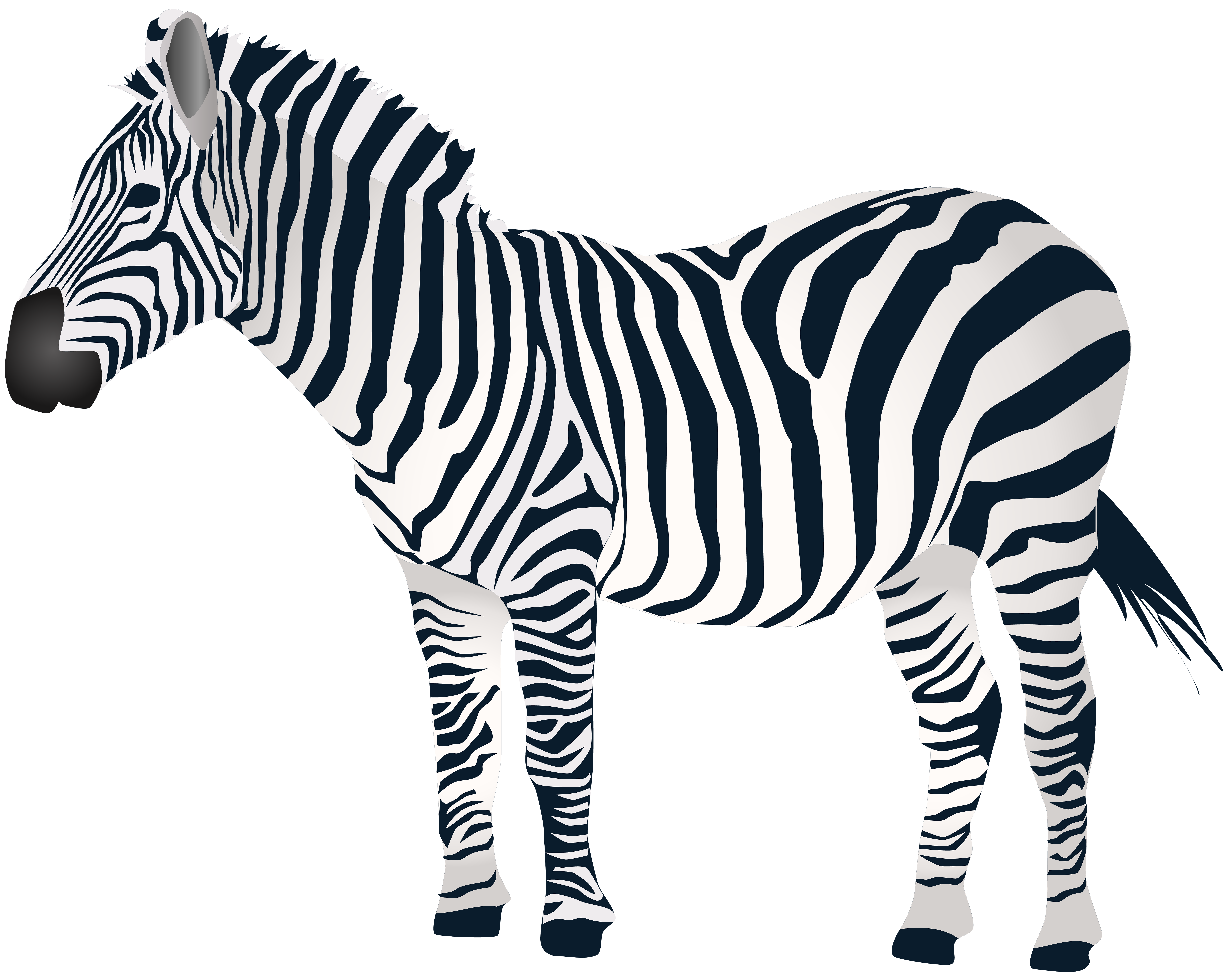 Clipart zebra pichers. Clip art png transprent